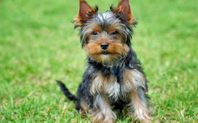 Tipps für den Urlaub mit Hund